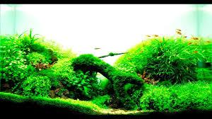 Nature Aquascape How To Build A Cheap Planted High Tech Nature Aquarium Aquascape