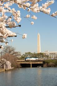 National Cherry Blossom Festival by Save On Amtrak Travel To The National Cherry Blossom Festival