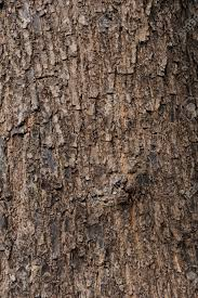 12531402 tree texture stock photo bark jpg 865 1300 wizard s