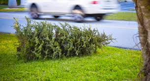 Christmas Tree Pick Up Humboldt U0027s Boy Scouts Would Just Love To Pick Up Your Rotting