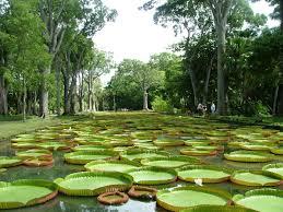 Botanical Garden Internship Internship With Pax Mauritius My Experience