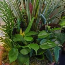 funeral plants oakmont floral funeral