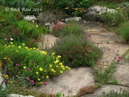 rock rose gardening trends