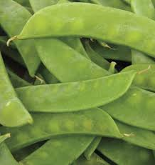 mammoth melting sugar snow pea seeds