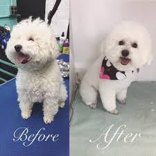 franko u0027s dog grooming home facebook