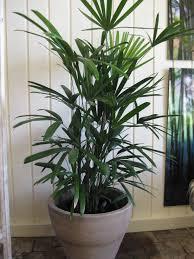 Inside Home Plants by Inside Plants