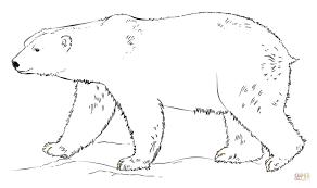 polar bear walking coloring free printable coloring pages