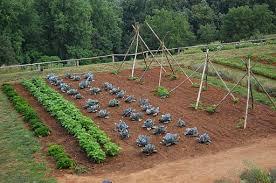 preparing a vegetable plot