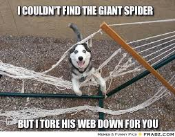 Funny Spiders Memes Of 2017 - dcd49d3fdb59d55905e32bee451a6633 the giant spider meme giant spider