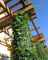 trellis vines green wall climbing vines columns elements