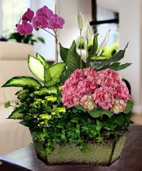 plant delivery deliver orchid plants to atlanta marietta dunwoody