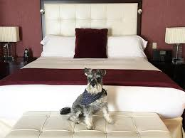 ma chambre a la forme d une cage ces hôtels qui acceptent les animaux de compagnie au québec eat