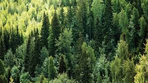 pine chemistry