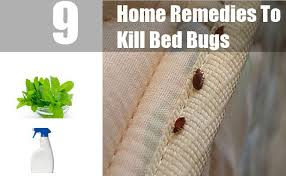 Home Remedies For Getting Rid Of Bed Bugs 9 Home Remedies To Kill Bed Bugs Natural Treatments U0026 Cure For