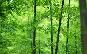 bamboo wallpapers full hd wallpaper search