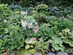 431 best hosta garden idea images on pinterest hosta gardens