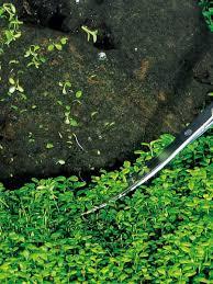 Aquascaping Tools Exceptional Value Aquatics