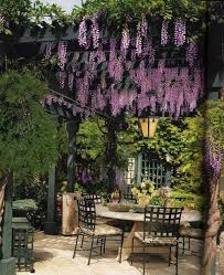 Small Backyard Design by Best 25 Wisteria Pergola Ideas On Pinterest Modern Pergola