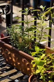 Urban Herb Garden Ideas - fire escape garden at my nyc apartment apartment living