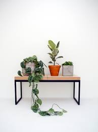 indoor plants and potted house plants on a bench in a minimal
