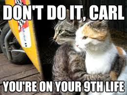 Cat Pic Meme - don t do it carl cat meme cat planet cat planet