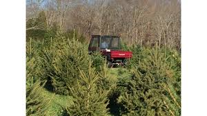 when s the best time to buy your tree wtnh
