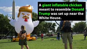 White House Renovation Trump by Giant Inflatable Chicken Resembling President Trump Set Up Near