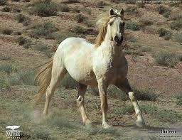 best 25 wild horses running ideas on pinterest horses pretty