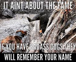 Hog Hunting Memes - 11 best hog hunting images on pinterest hog dog hog hunting and