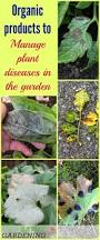 Plant Diseases With Pictures - plant diseases in the garden how to prevent and control them