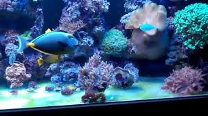 led lights for coral tanks saltyfish s mixed reef tank tour led lighting youtube