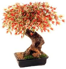 artificial japanese maple bonsai tree large