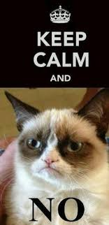 Angry Cat Meme No - tard the grumpy cat no haha tard the grumpy cat that angry cat