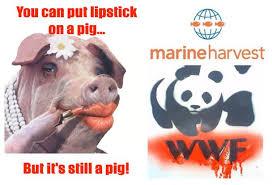 Lipstick Meme - pig in lipstick meme the art of beauty