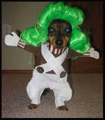 Dog Costume Halloween 60 Creative Dog Halloween Costumes Ideas