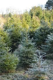 penpont opens for christmas trees