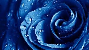 blue flower blue flower images