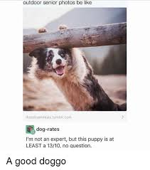 australian shepherd meme 25 best memes about dog rates dog rates memes