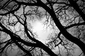 free stock photo of black and white creepy scary trees