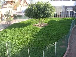 best 25 growing grass from seed ideas on lawn repair