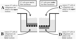the electrical resistance breakdown assay determines the role of