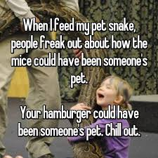 Chill Out Bro Meme - 20 pet owners reveal what it s really like to have exotic pets