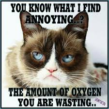 Grumpy Cat Meme Love - fresh grumpy cat meme images 1000 images about grumpy cat i love