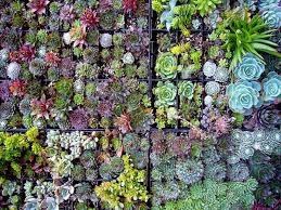 succulent garden designs garden design ideas