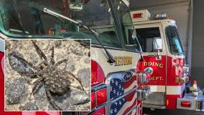 I Tried Killing A Spider - man trying to kill spider sets fire to his apartment inside edition