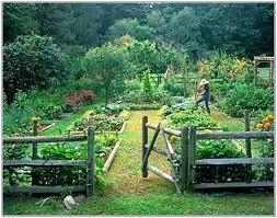 Garden Layouts For Vegetables Vegetables Garden Design Hydraz Club