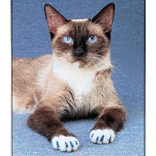 soft claws u0026 soft paws soft claws nail caps for cats and kittens