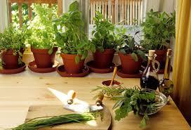 plante aromatique cuisine algoflash cultivez vos propres plantes aromatiques