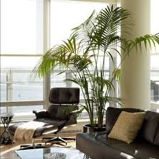 Beautiful Indoor House Plants Ideas - Home decoration plants