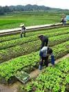Cómo practicar la agricultura sostenible: 6 pasos